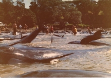 1984, March 19, Tryphena Harbour, Great Barrier Island